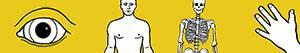 ausmalbilder Menschlicher Körper malvorlagen
